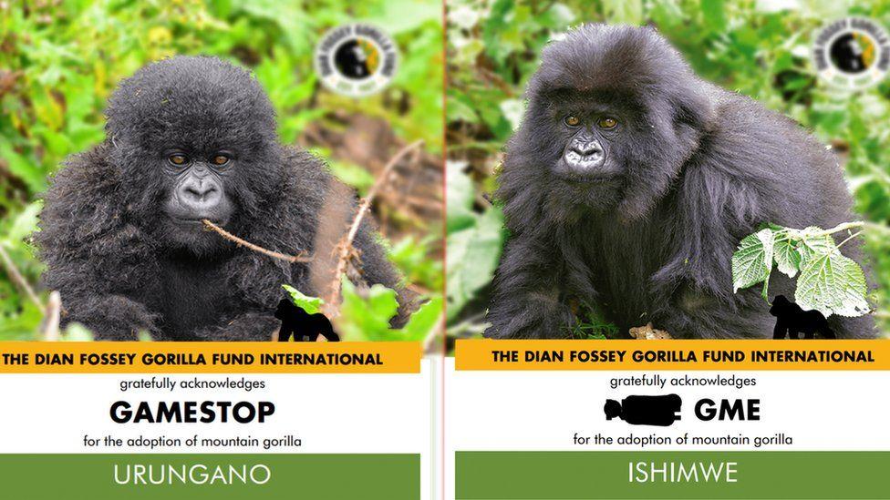 GameStop: Reddit Users Investing In Gorilla Conservation