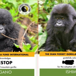 gamestop-reddit-users-investing-in-gorilla-conservation