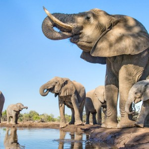 Government To Allow Elephant Hunts At The Cost Of $70,000 Per Animal Shot