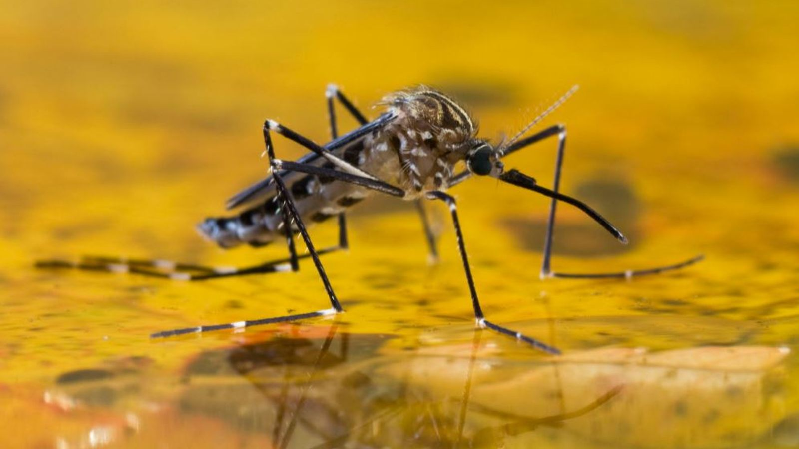 Malaria: World's Most Effective Vaccine Developed In UK For Disease