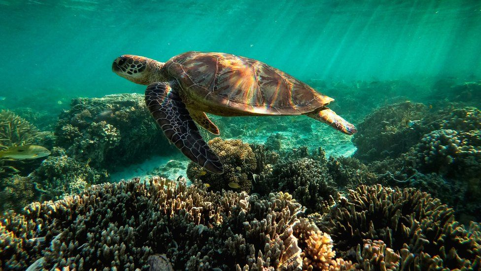 Unesco: Great Barrier Reef Should Be Listed As 'In Danger'