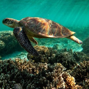 unesco-great-barrier-reef-should-be-listed-as-in-danger